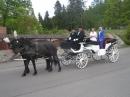 Zdjęcie 4 - Kareta do Ślubu...