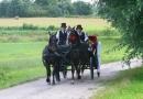 Zdjęcie 8 - Bryczka do Ślubu - Chojnice