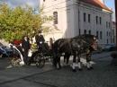 Zdjęcie 10 - Bryczka do Ślubu - Chojnice