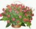 Zdjęcie 2 - Kwiaciarnia Aga