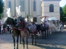 Zdjęcie 2 - Hiszpańskim Zaprzęgiem do Ślubu